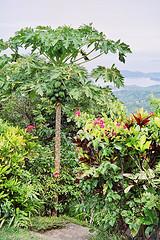 papaya leaf cancer enzymes