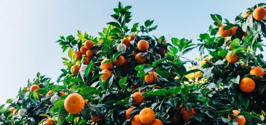 Citrus increase circulation