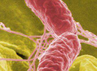 New prebiotic found