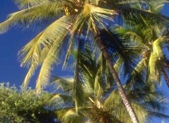 Alzheimers and coconut oil