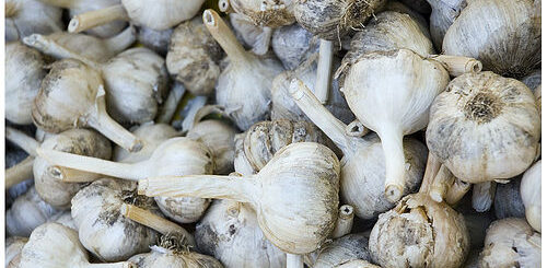aged garlic reduces blood pressure