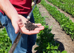 GMO soybeans have higher levels of formaldehyde