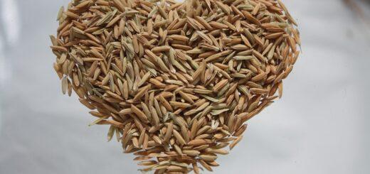 Rice bran improves heart health.